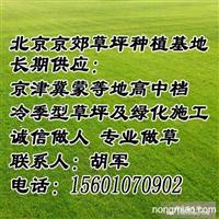 延庆销售草坪 延庆绿化草坪价格 延庆草坪厂家批发