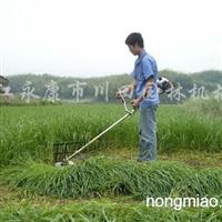 供应川田牌小型小麦、玉米、水稻、甘蔗收割机