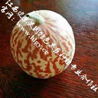 种植香水瓜好收益【供应优质香水瓜种子批发】