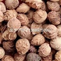 辽宁省臭李子种子/东北臭李子种子