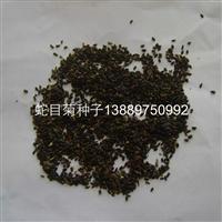辽宁省蛇目菊种子育苗播种技术