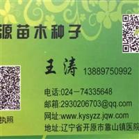 辽宁省复叶槭种子价格一览表