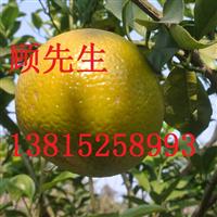 苏州光福梅花盆景古桩苗圃别墅果树