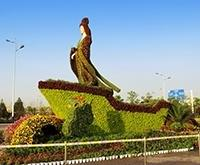 五色草造型、仙女造型、花卉造型设计制作
