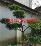 苏州别墅景观绿化、庭院别墅绿化设计施工