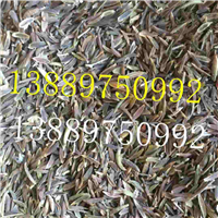 红丁香种子价格一览表