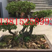 苏州庭院景观设计、鸿运果树桩、绿化公司