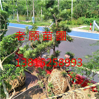 苏州工程企业绿化、私家别墅景观绿化施工
