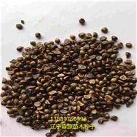 辽宁省三叶地锦种子价格一览表