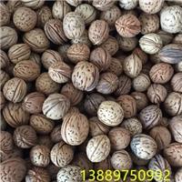 辽宁省京桃种子多少钱一斤