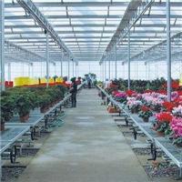 温室育苗床热镀锌移动苗床生产批发商