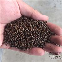 辽宁省火炬种子发芽率百分之九十