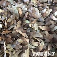 辽宁省五角枫种子多少钱一斤