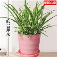北京花卉租赁公司