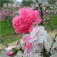 桃花树—桃花树—桃花树