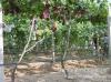 安徽飞龙灌溉技术有限公司