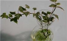 水培花卉营养液也需要喂氧