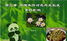 花卉生长发育需要哪些营养元素