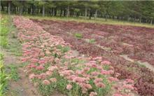 黑龙江:林业产业基金主要投向花卉及苗木等九大产业