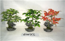 怎样制作果树盆景?盆栽什么果树里既好种又结果?