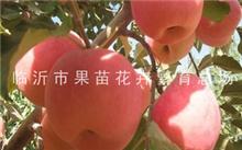 红富士苹果有哪些营养价值?