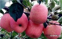 昆明富士苹果价格,红富士苹果的营养价值
