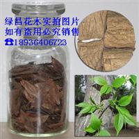 精选优质杜仲种子 特价杜仲树种子 批发杜仲种子 中药杜仲