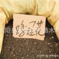 批发新采花卉种子 鸡冠花种子 保质保量