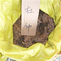 杜仲种子 药材种子 62元1公斤 当年新种子 中药种子