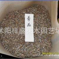【厂家直销】菊花种子  当年新采 保质保量  支持货到付款