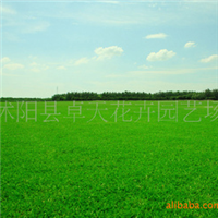 批�l草�N子:供���M口草坪�N子,早熟禾�N子,(午夜2�)