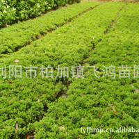飞鸿苗圃基地供应大量优质杜鹃苗  品种齐全 价格合理