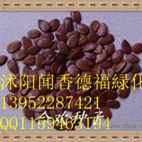 批发供应合欢种子     垂丝海棠种子    多花木兰种子等�v化