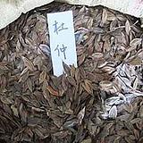 【杜仲种子】名贵滋补药材 新采种子 林木种子