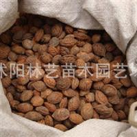 供应优质毛桃核种子 桃树种子