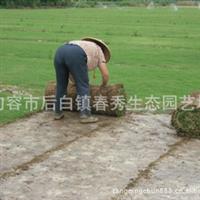 供应陕西草坪 草皮 绿化工程苗木