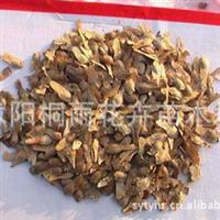 出售红枫种子 价格优惠 品种齐全