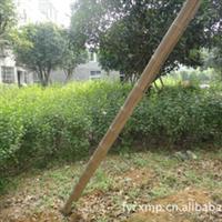 低价供应 绿化苗木 木槿 茉莉花盆栽 绿化苗木批发