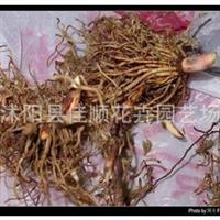 百合种球 兰花种子 西红花种子 藏红花种球 郁金香种子 铃兰花