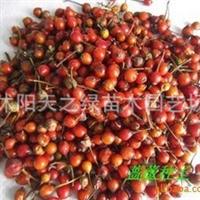 产地批发出售:月季种子,蔷薇种子等