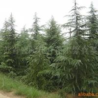 供应各种乔木,灌木