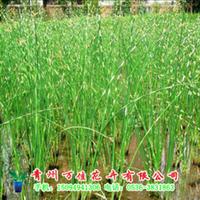 供��水�[,�9└鞣N水生植物