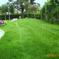 供��草坪施工、草坪修剪、割草、草坪建植