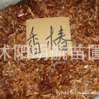 批发供应苗木种子 红油香椿种子 当年新�� 量大优惠