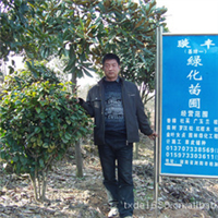 湖南绿化苗木基地 浏阳花木之乡供应各种绿化苗木 乔木 灌木 地苗