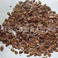 批发零售黑油椿种子、红油香椿种子、焦作红香椿种子 香椿种子