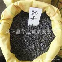 批发供应优质进口牡丹种子 颜色齐全 高产 当年新采