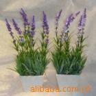 供��薰衣草 天竺葵 一串�t �f�劬盏炔莼�花卉400-6627727