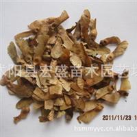 出售日本红枫种子适合与寒冷气候,喜营养丰富且排水良好的肥沃土
