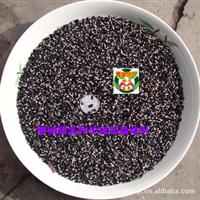 圣诞树种子 鱼骨松种子 银荆树种子 澳洲白包金合欢种子(1公斤)